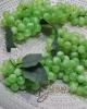 Szőlő / XL-Zöld
