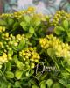 Dús bogyós növénycsokor / Sárga