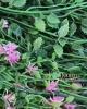 KIÁRUSÍTÁS 225 cm.virágfüzér- Lila/ 12 DB.OS SZETT