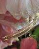 Zirconia strasszos hullámcsat / arany színű