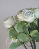 Minőségi rózsaszál / Fakó halványmenta