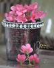 Virágköteg / Rózsaszín