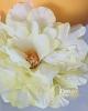 Nagyméretű virágfej / Lime