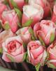 Szálas rózsabimbó / Rózsaszín