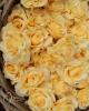 Rózsa / Repcesárga