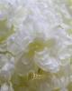 Exclusive virágfej szárral / Törtfehér